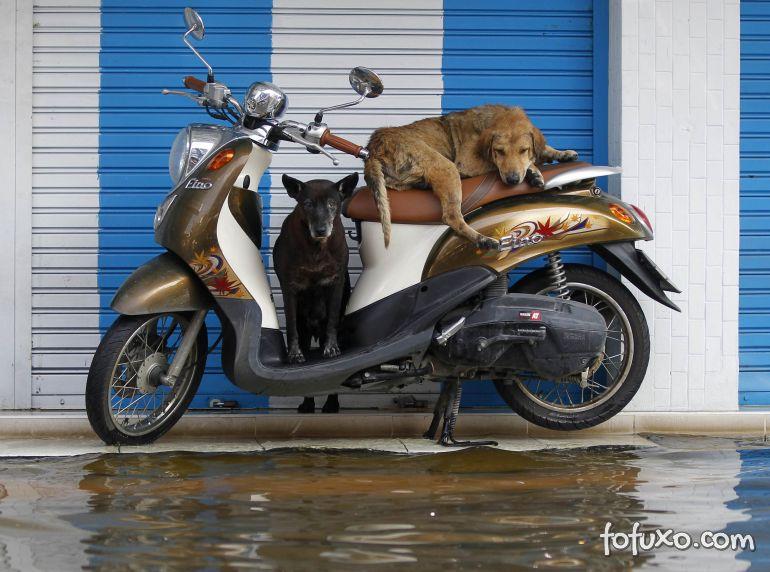 Dicas para manter o seu cão seguro em alagamentos