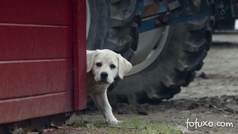 Comercial com cachorro perdido é eleito melhor do Super Bowl
