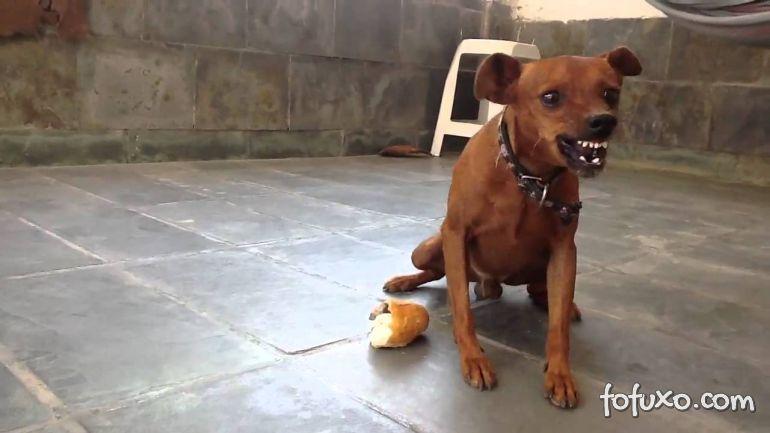 Cachorros pequenos são mais agressivos?