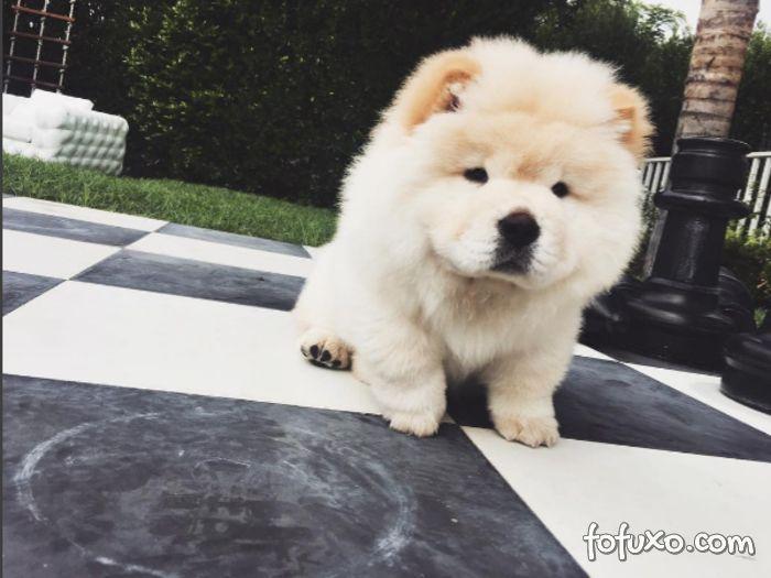 Justin Bieber abandona cachorro doente