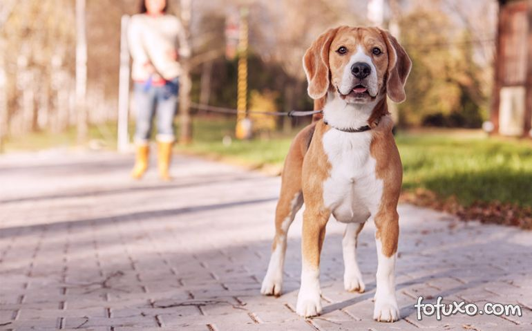 Saiba como fazer com o cachorro que puxa durante o passeio