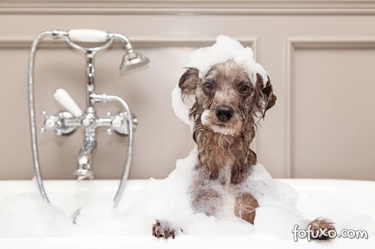 Saiba a partir de quando o filhote pode tomar banho