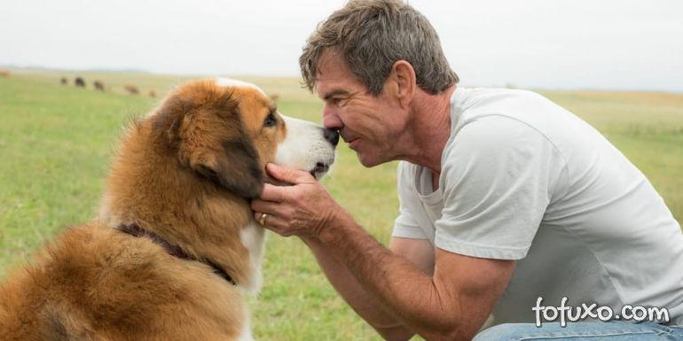 Autor defende equipe de gravações do filme 'Quatro Vidas de um Cachorro'