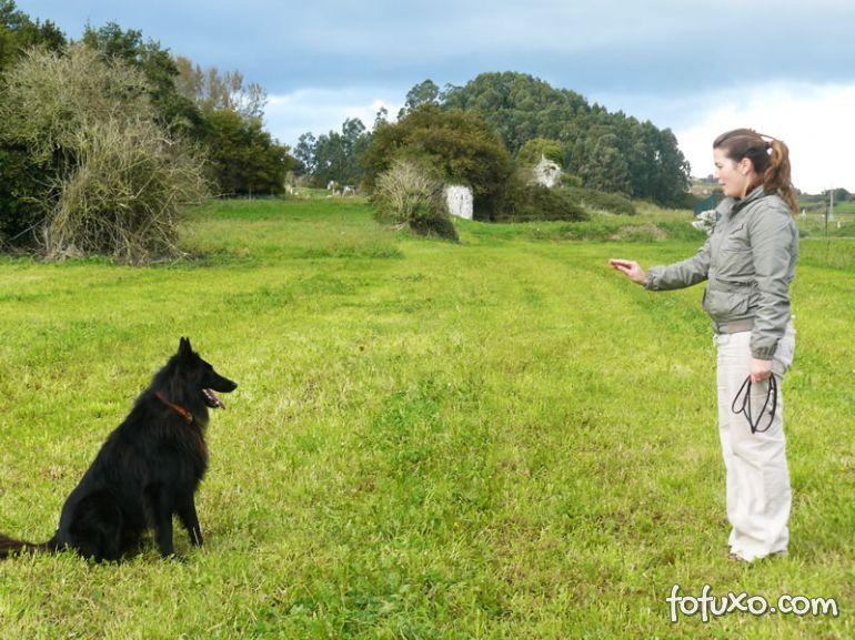 Confira alguns mitos e verdades sobre adestramento de cães
