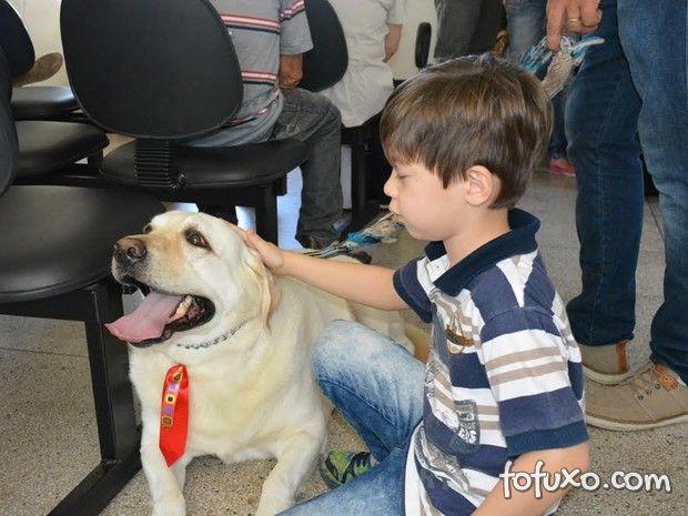 Conheça o cachorro labrador que ajuda crianças no tratamento do câncer