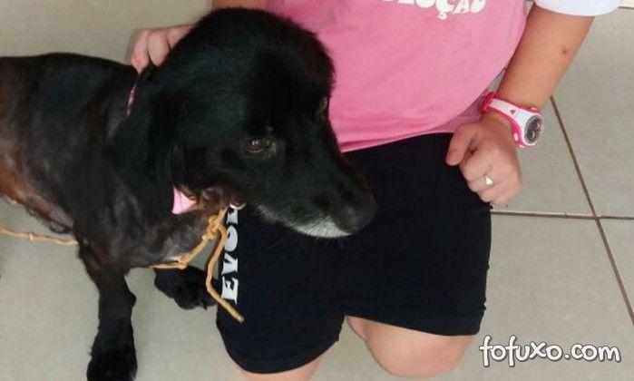 A incrível história de Sherlock, o cão que retornou para casa depois de 2 anos