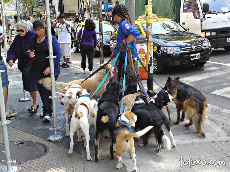 Norte-americanos devem procurar mais passeadores de cães do que professores