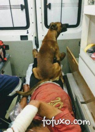 Cachorro que acompanha dono até o hospital fica famoso na web
