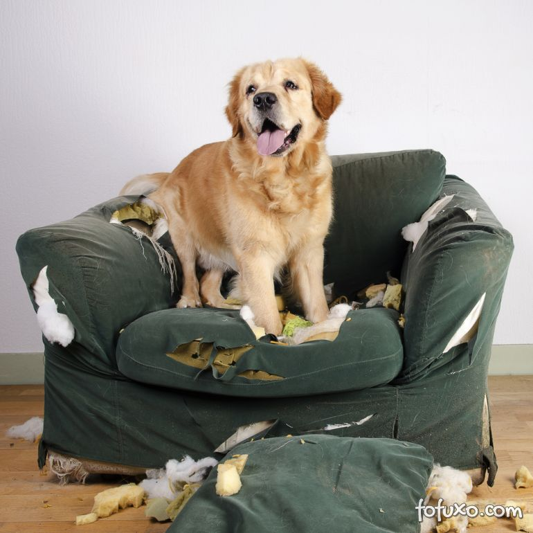 Dicas para ajudar os cachorros que sofrem de estresse