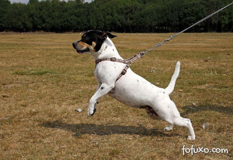 Dicas para fazer o cachorro parar de puxar durante o passeio