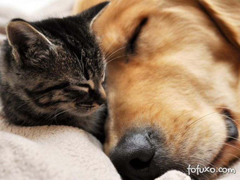 Pesquisa revela dados e comportamentos de donos de pets no Brasil