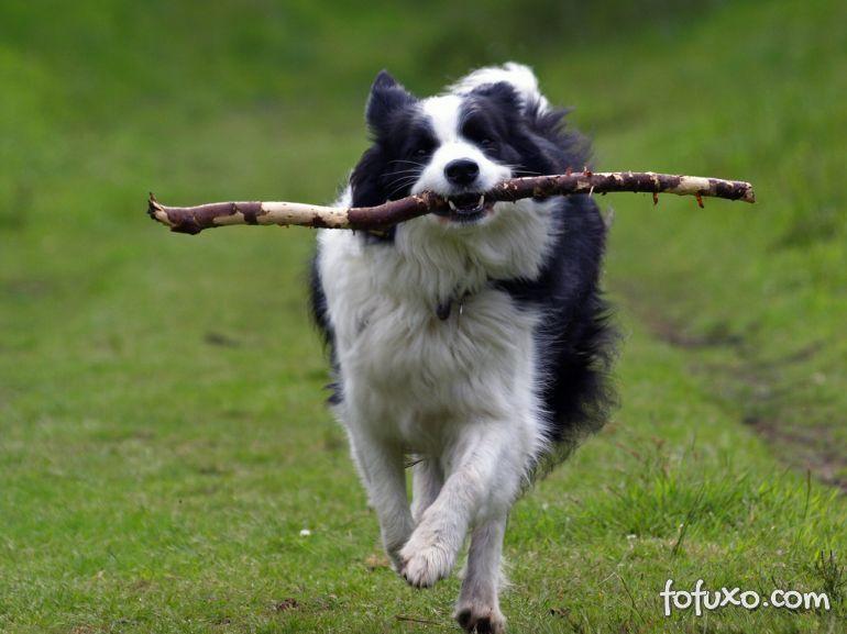 Dicas para desenvolver a inteligência de filhotes de cachorro
