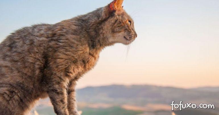 Entenda os motivos que levaram os gatos a se tornarem animais solitários