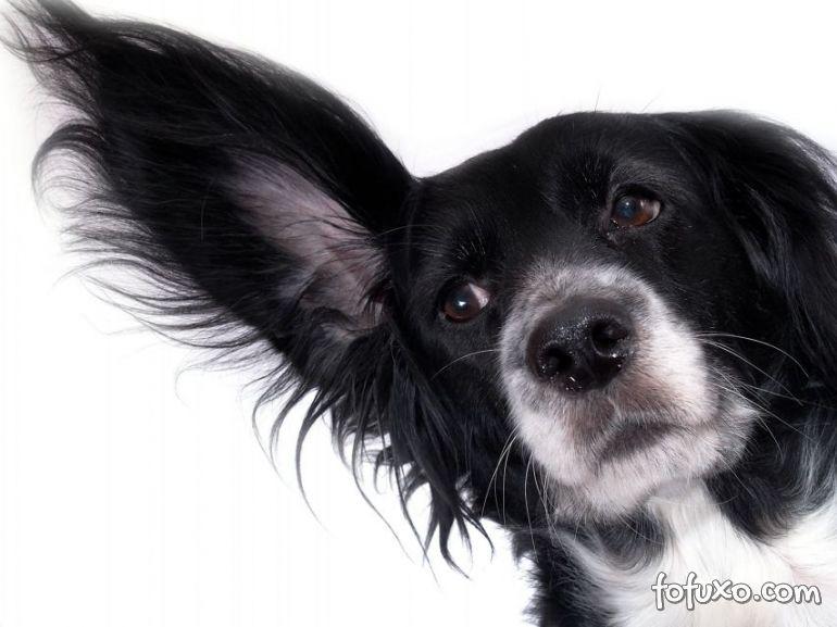 """Estudo afirma que as pessoas realmente """"entendem"""" seus cães"""