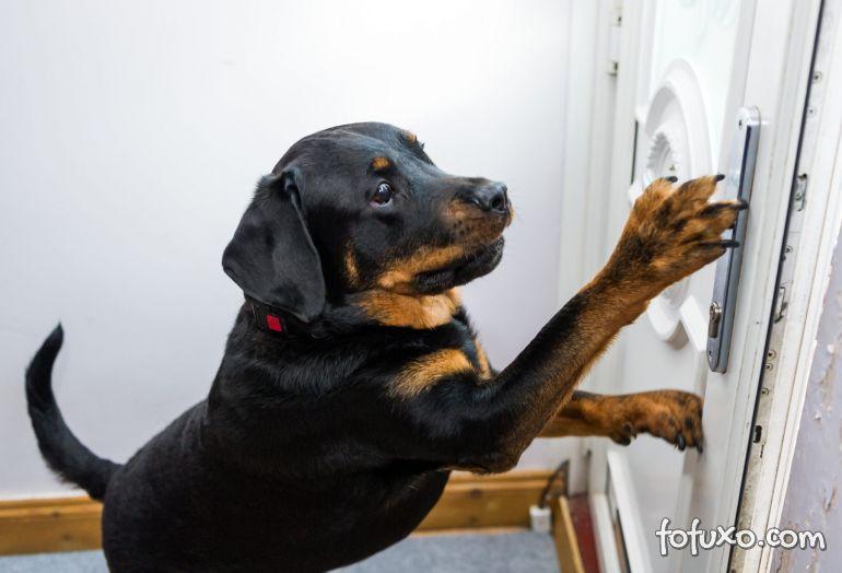 Cachorro salva vida de dono na Inglaterra