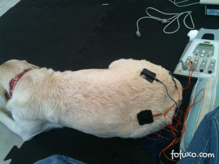 Confira os benefícios da fisioterapia para cães