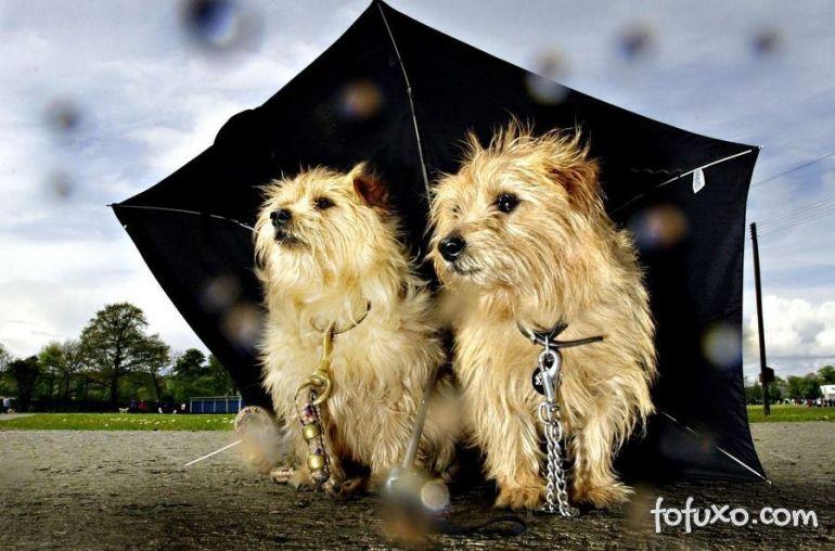 Dicas para passear com o pet nos dias de chuva