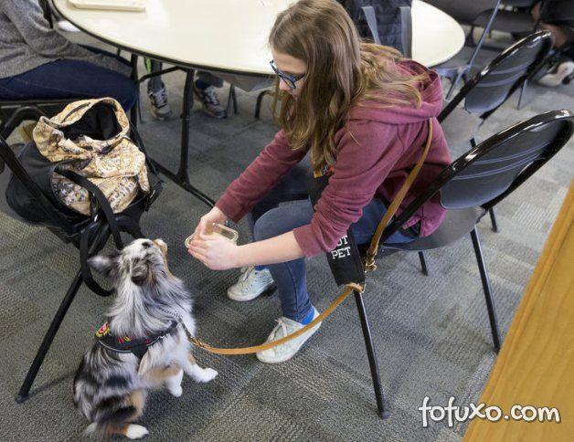 Cachorro ajuda dona ao farejar glúten na comida