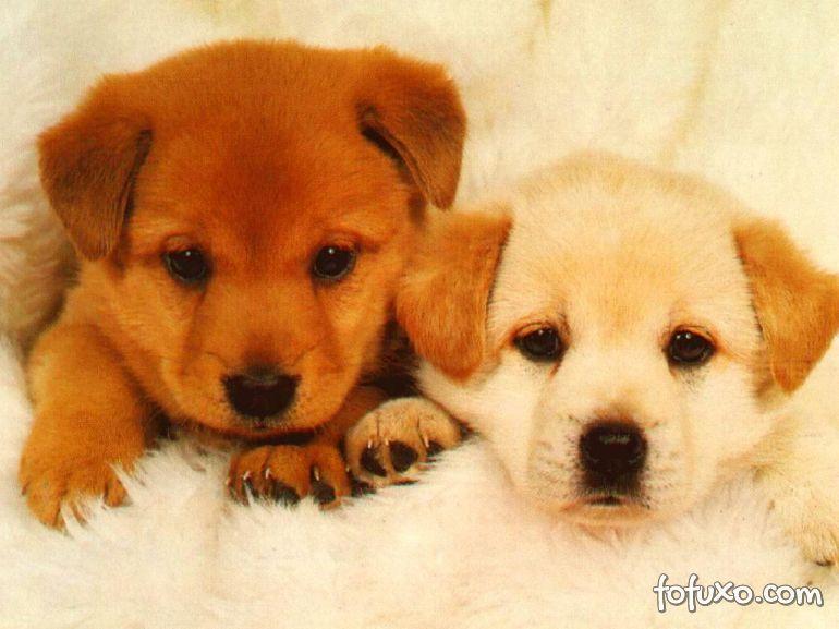 Confira os 10 principais cuidados com a saúde dos filhotes de cachorros