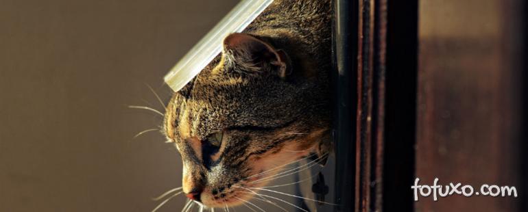 Dicas para fazer seu gato ficar caseiro e não fugir?