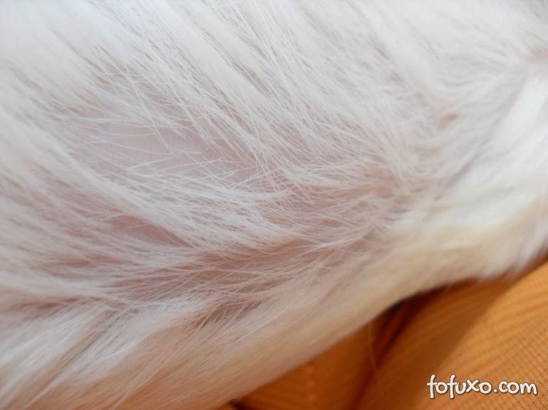 Conheça algumas das causas da queda de pelos nos gatos