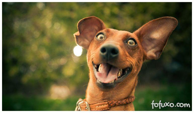 3 sinais de que o seu cachorro realmente é feliz