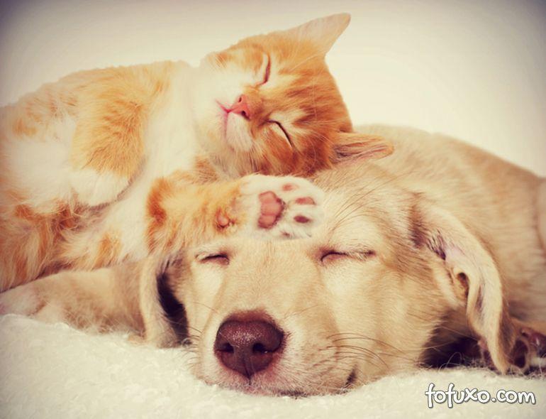 Saiba se paulistanos preferem cachorros ou gatos
