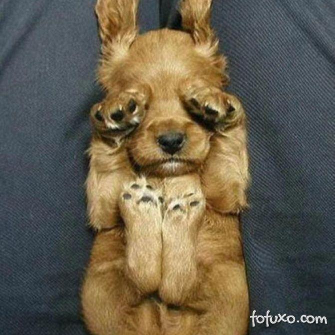 Conheça a personalidade do seu cachorro pela posição que ele dorme