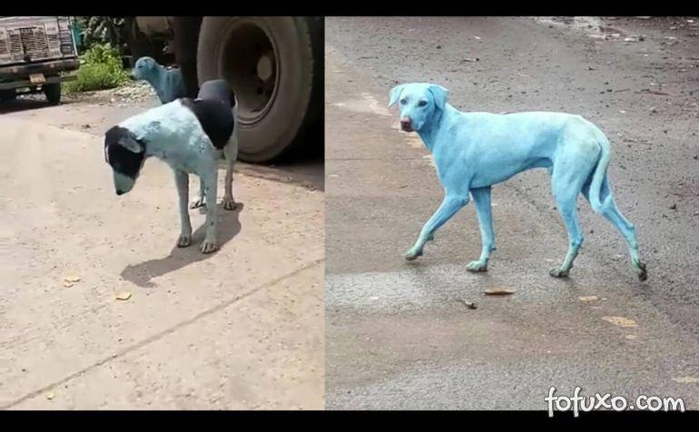 Cachorros estão ficando azuis na Índia