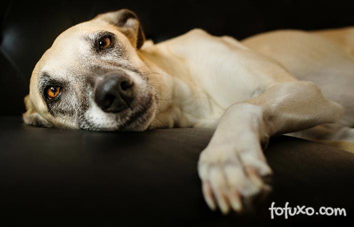 Conheça os efeitos que os corticóides podem ter em cães
