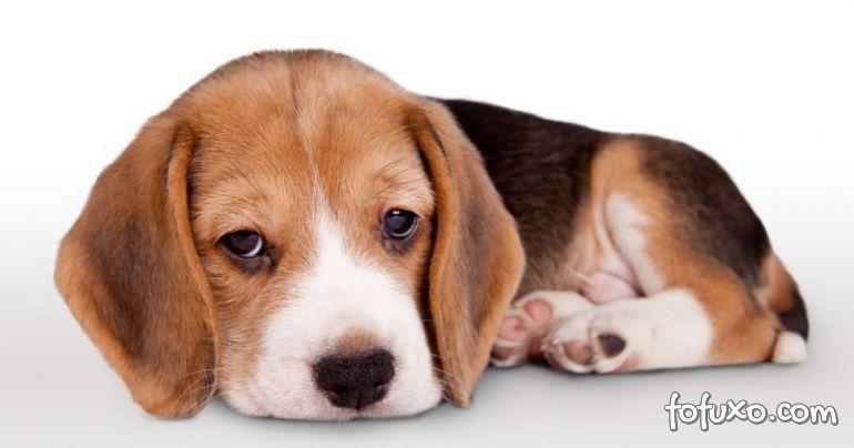 Aprenda a perceber se o cachorro está com depressão