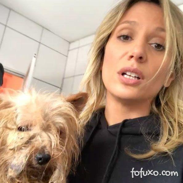 Polícia resgata 135 cachorros de canil após denúncia de Luisa Mell