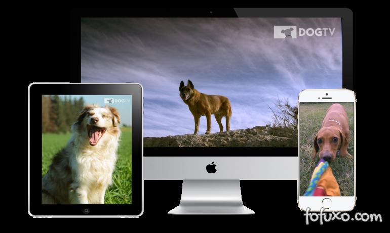 Conheça o canal de TV para cachorros que está chegando ao Brasil