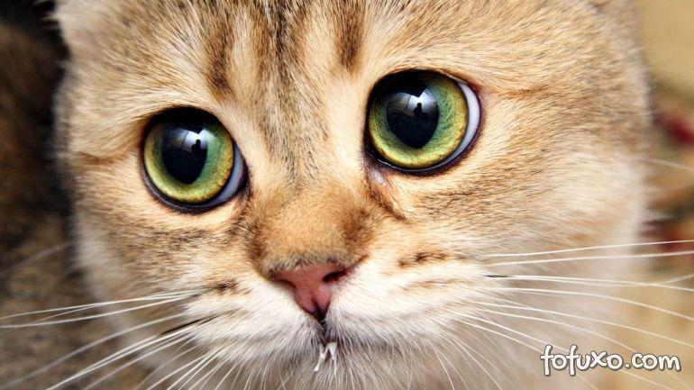 Saiba como funcionam os olhos dos gatos