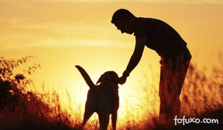 Cachorros reduzem risco de doenças cardiovasculares