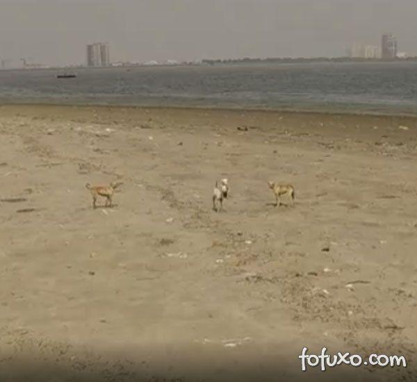 Conheça a ilha que é habitada somente por cães