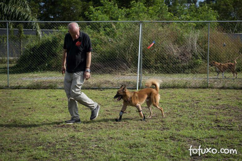 Cachorro que teve as patas mutiladas ganha próteses
