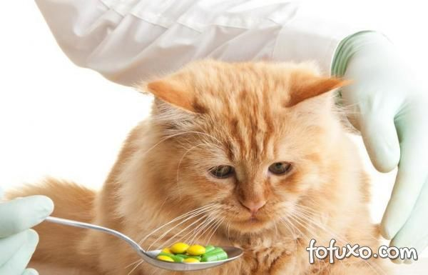Conheça suplementos naturais para cachorros e gatos
