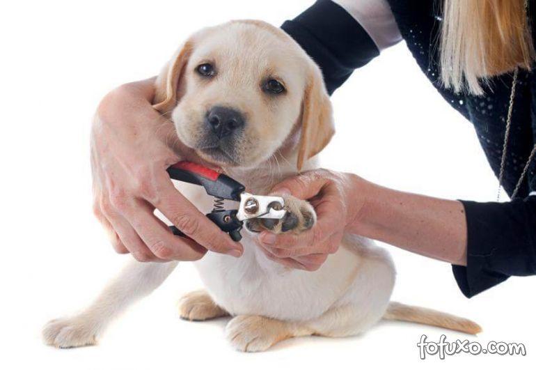 Por que os cães não gostam de cortar as unhas?