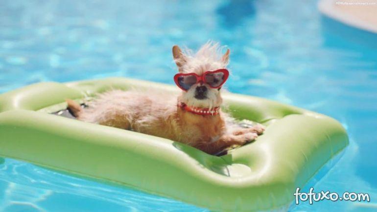 Cuidados com os cães depois do verão