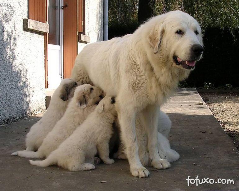 Saiba qual é o momento certo de separar os filhotes da mãe