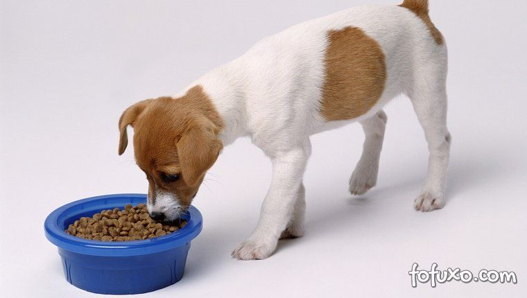 Saiba se o seu cachorro está sendo bem alimentado