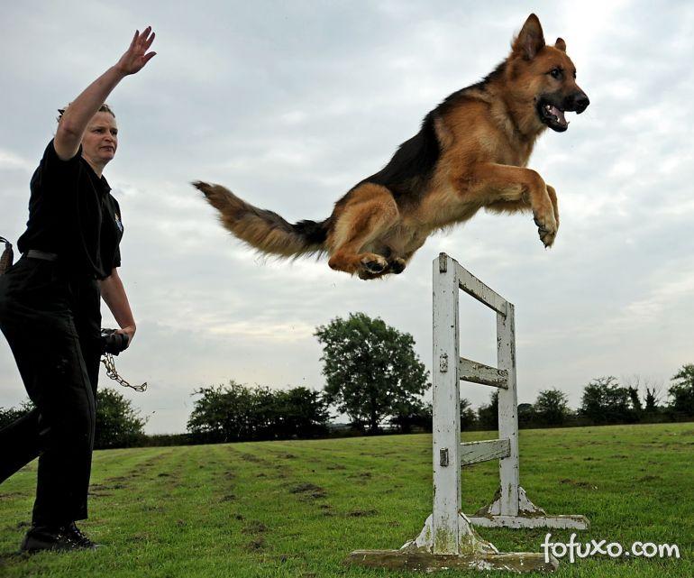 Confira alguns exercícios básicos de comando para cachorros