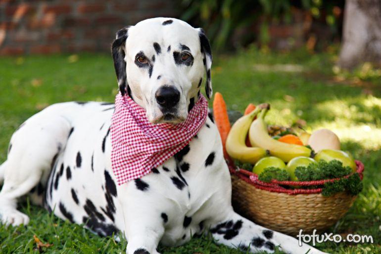 Confira os benefícios do Ômega 3 para os cachorros