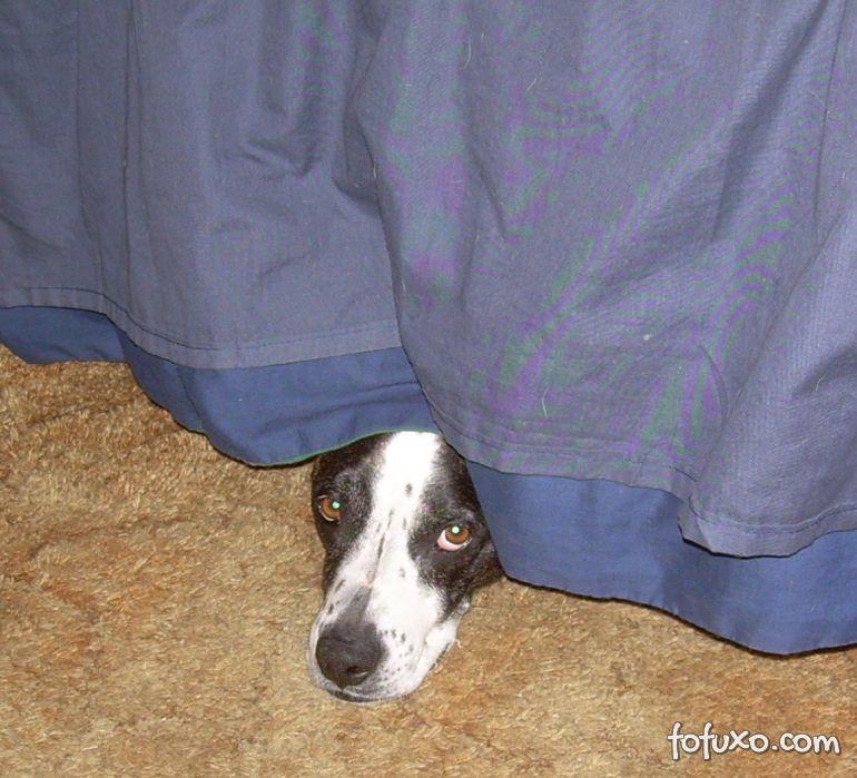 Confira algumas fobias de cachorros