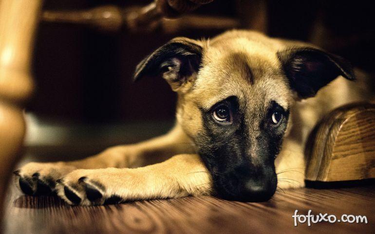 O que fazer quando os cães aparecem com ferimentos na boca?