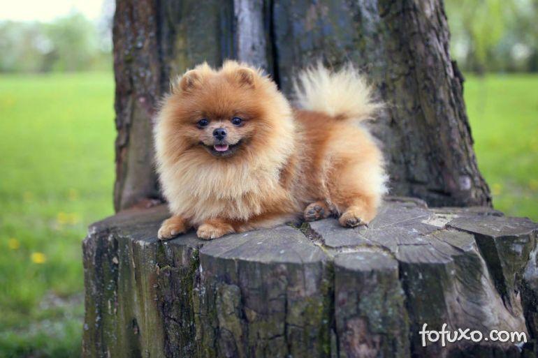 Conheça as melhores raças de cães para viagens