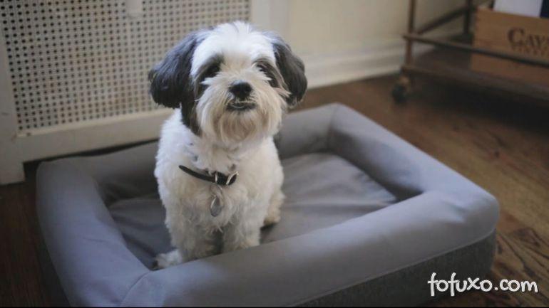 Empresa investe na fabricação de colchões para cães