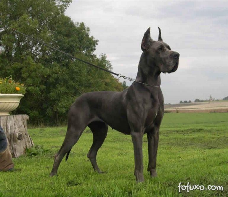 Confira raças de cães para sítios
