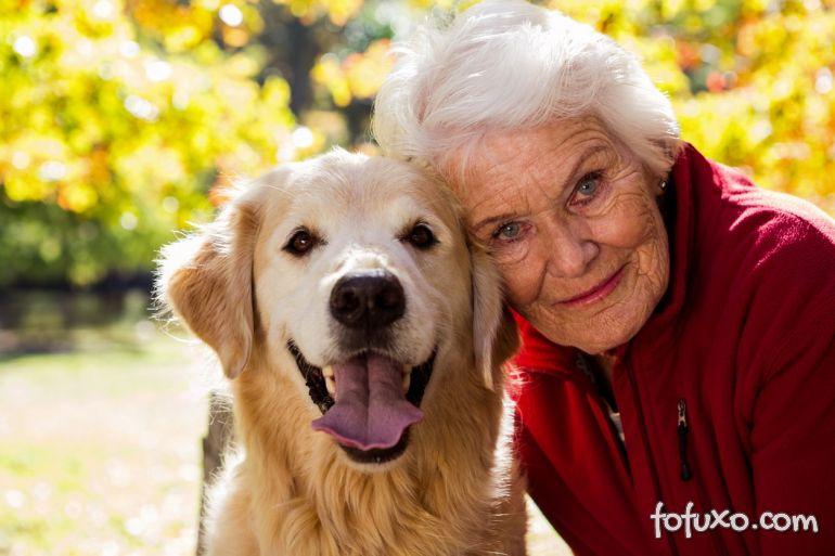 Idosos: Companhia dos cães faz bem para a saúde